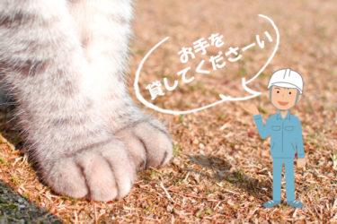雑工とは|猫の手も借りたい現場監督に人の手を貸すこと